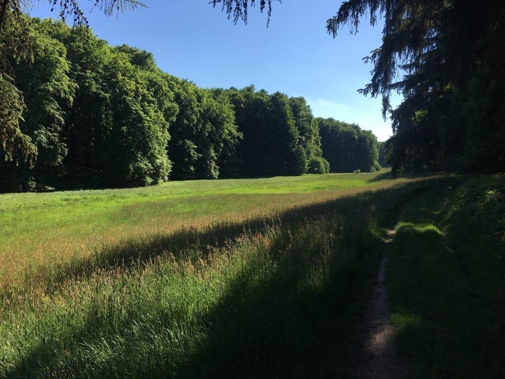 Am Waldrand hinter Groß Zecher - Radtour um den Schaalsee