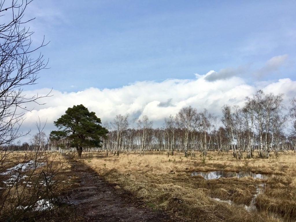 Birken und Sumpflandschaft auf der Wanderung im Duvenstedter Brook
