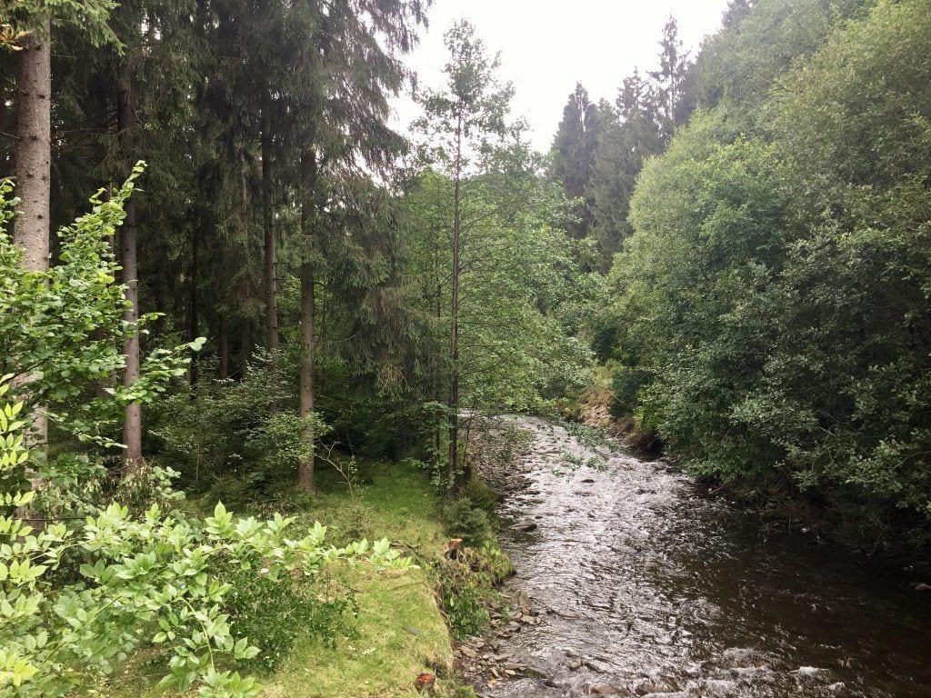 """Die """"Innerste"""" im Märchenwald"""