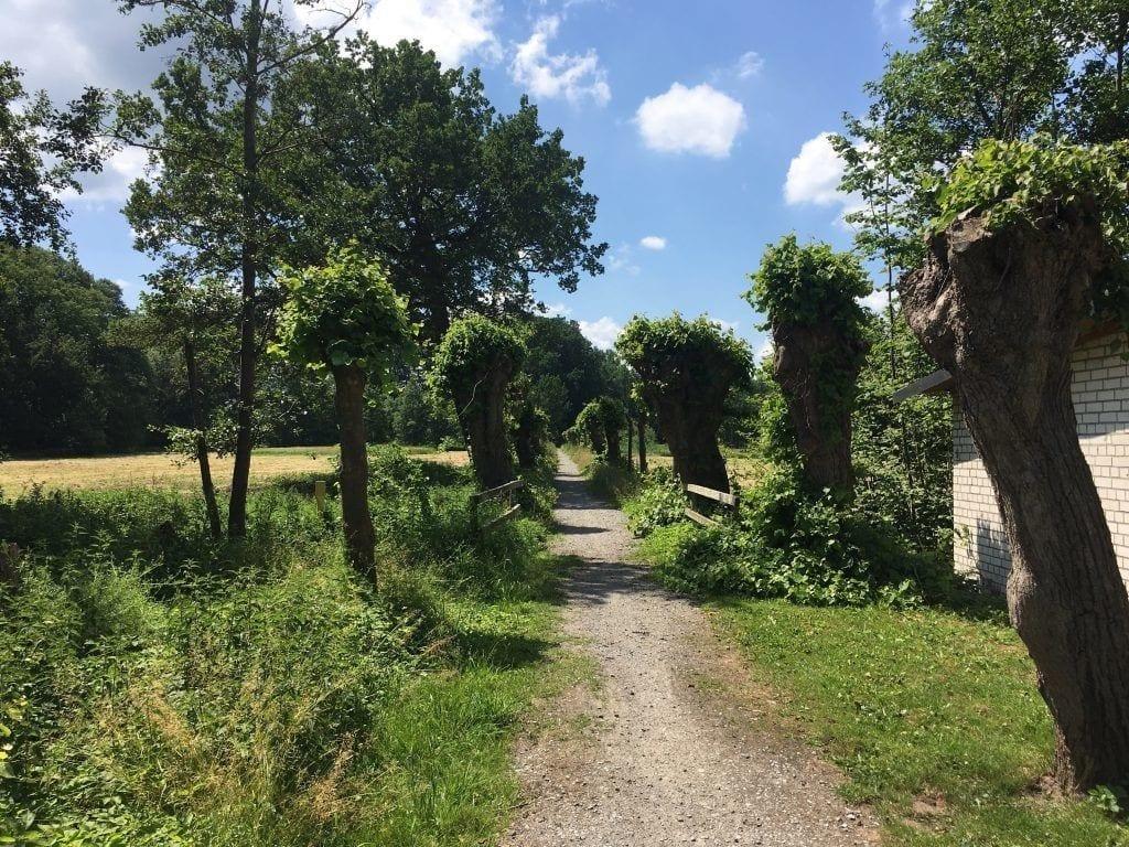 Radweg bei Püggen auf der Fahrradtour im Wendland
