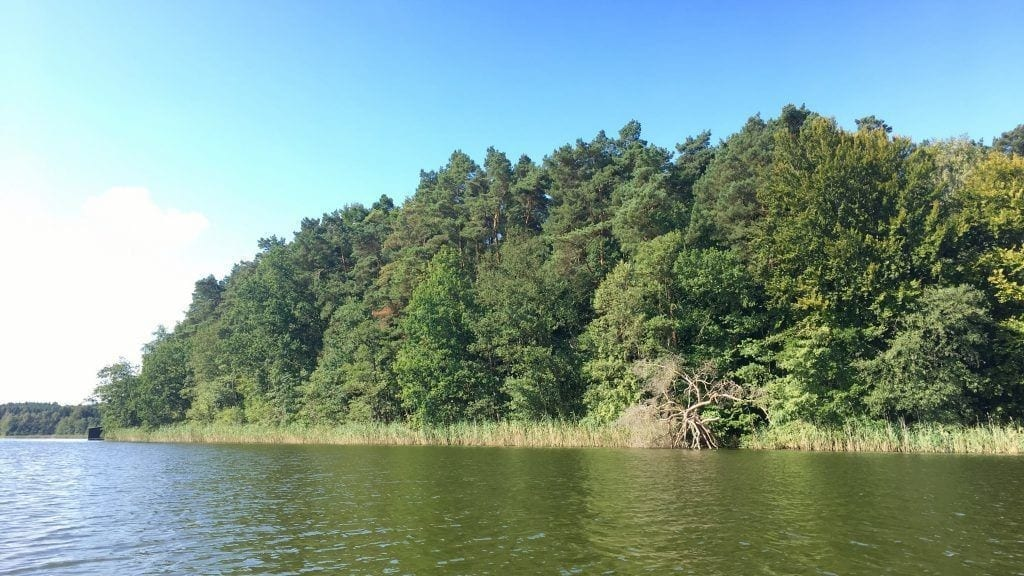 Uferwald am Leppiner See