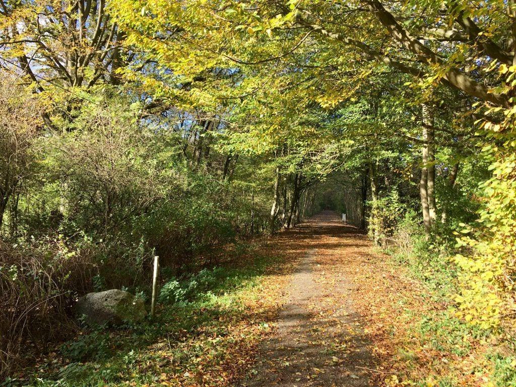 Herbstlicher Wanderweg bei Trittau