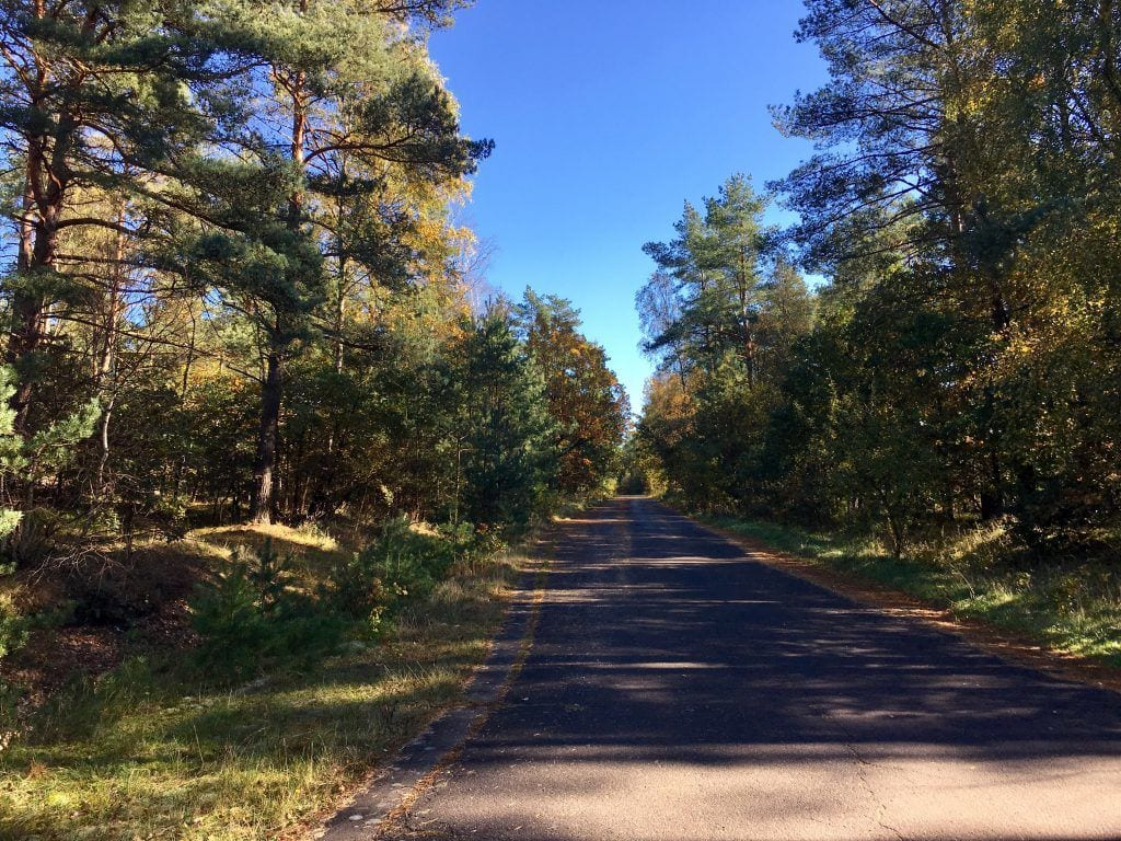 Im Wald bei Steinbeck/Luhe