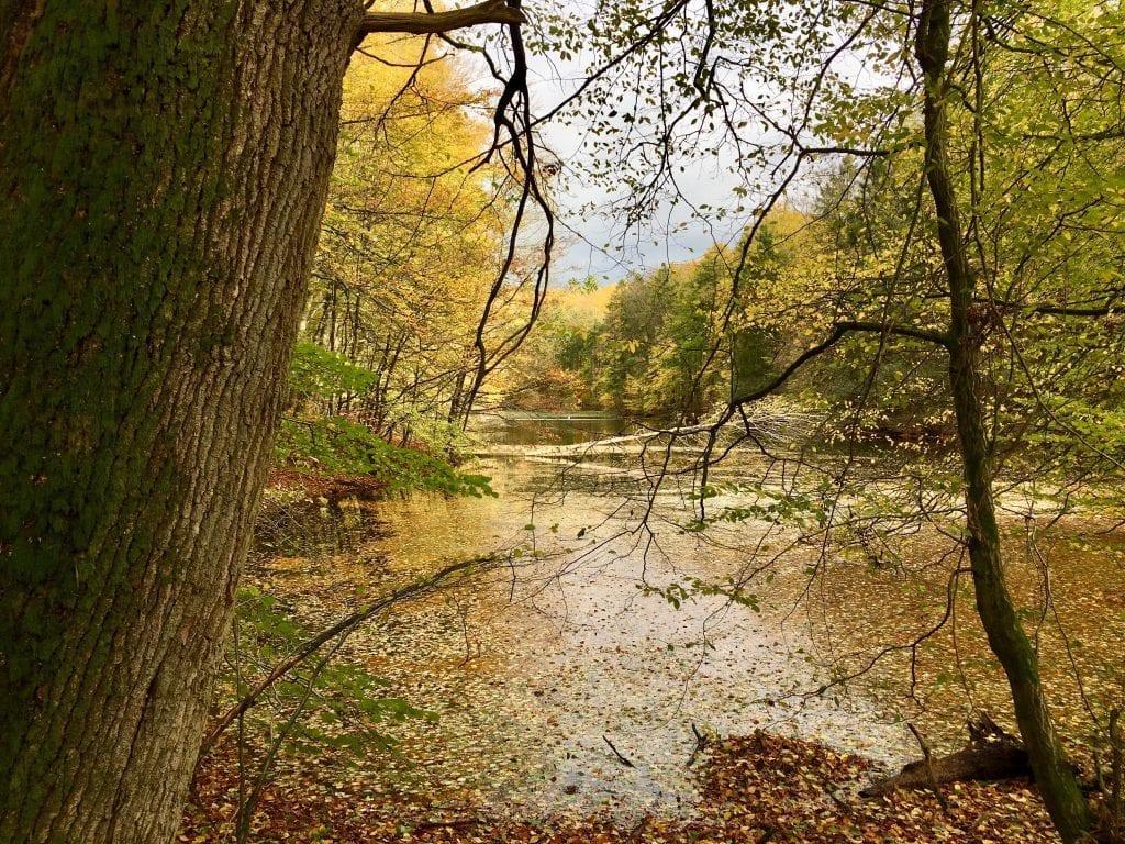 Traumhafter herbstlicher Waldsee auf der Wanderung durch die Hahnheide