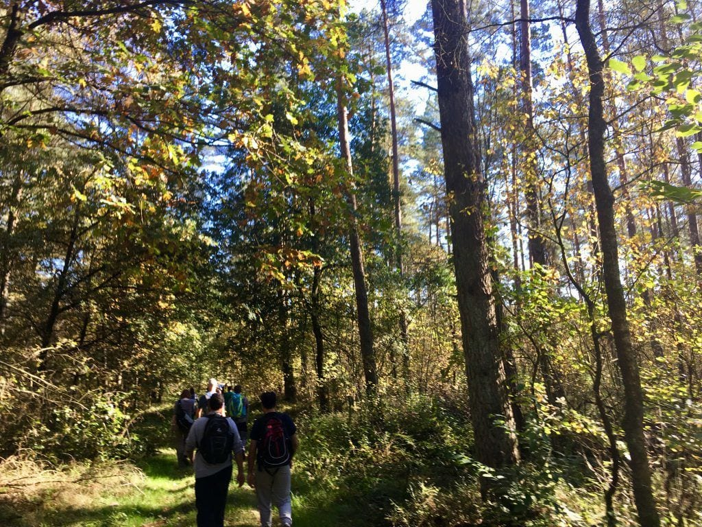 Von Bispingen nach Amelinghausen - Wandern im Wald