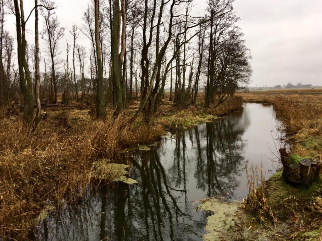 Auenlandschaft an der Netzebander Heide - - bei Wolgast und der Insel Usedom