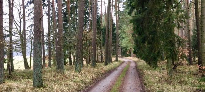 Mountainbike-Rundtour durch die Wälder westlich von Wolgast