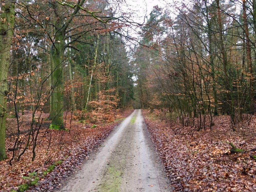 Waldweg nach Buddenhagen - bei Wolgast und der Insel Usedom