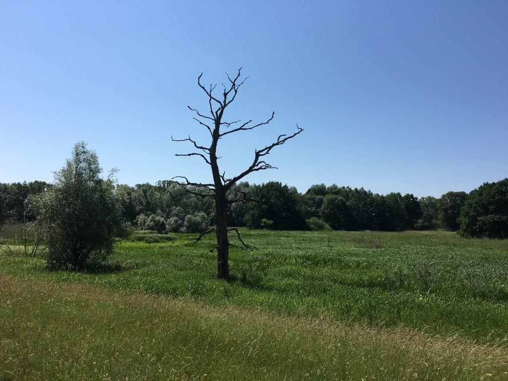 Sumpflandschaft am Elberadweg bei Lauenburg