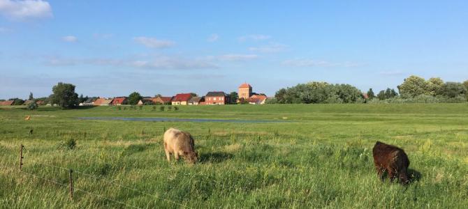 Elberadweg: Fahrradtour von Wittenberge nach Havelberg