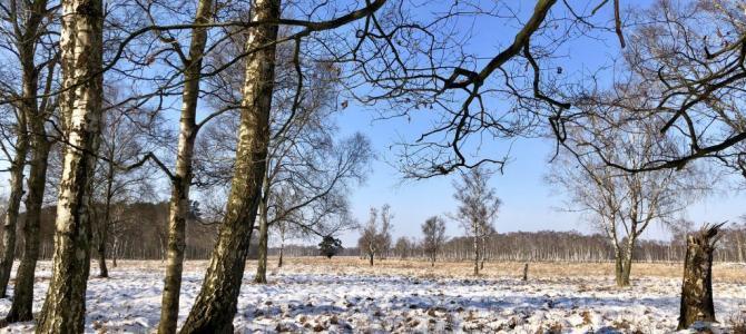 Winterliche Wanderung im Duvenstedter Brook