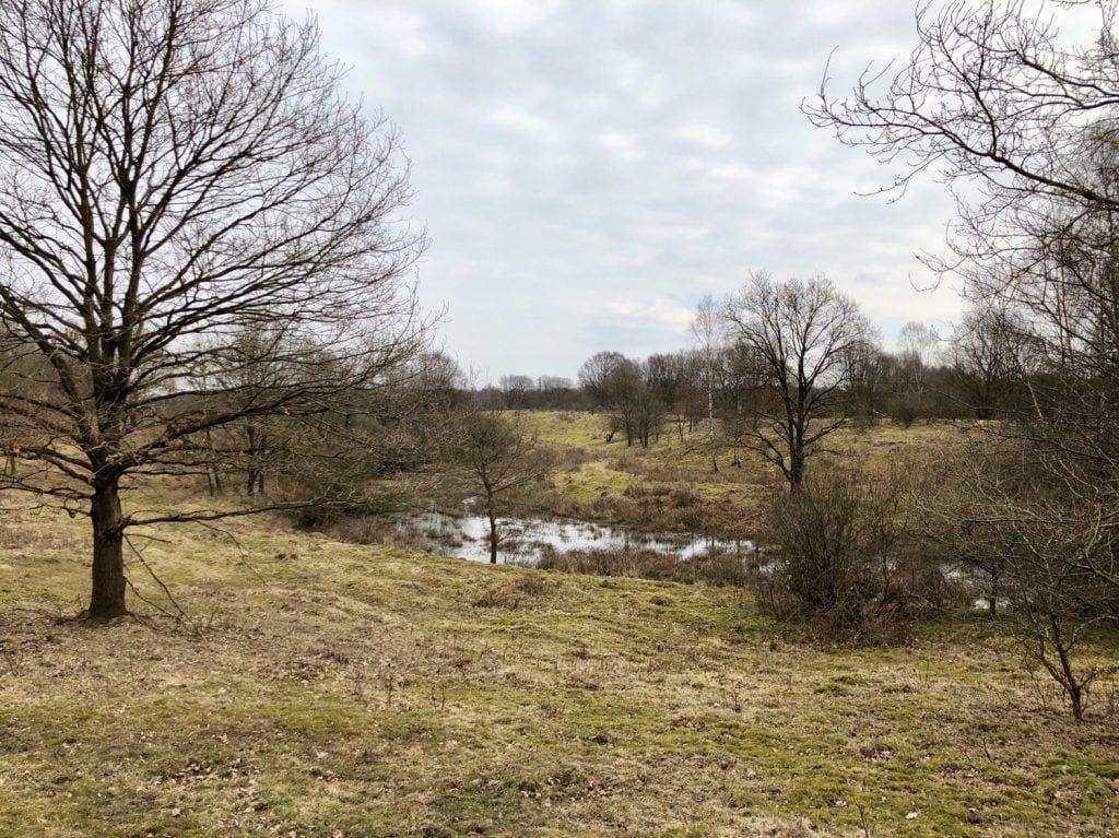Die Heidelandschaft im Naturschutzgebiet Höltigbaum in Hamburg