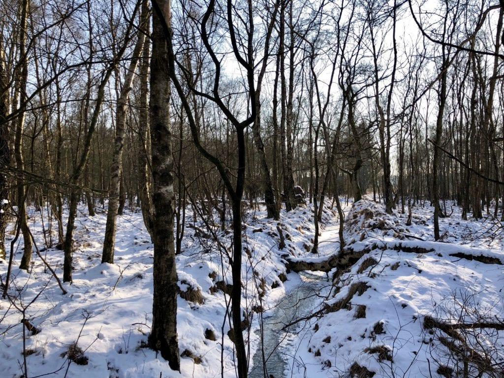 Kleiner Bachlauf im Duvenstedter Brook