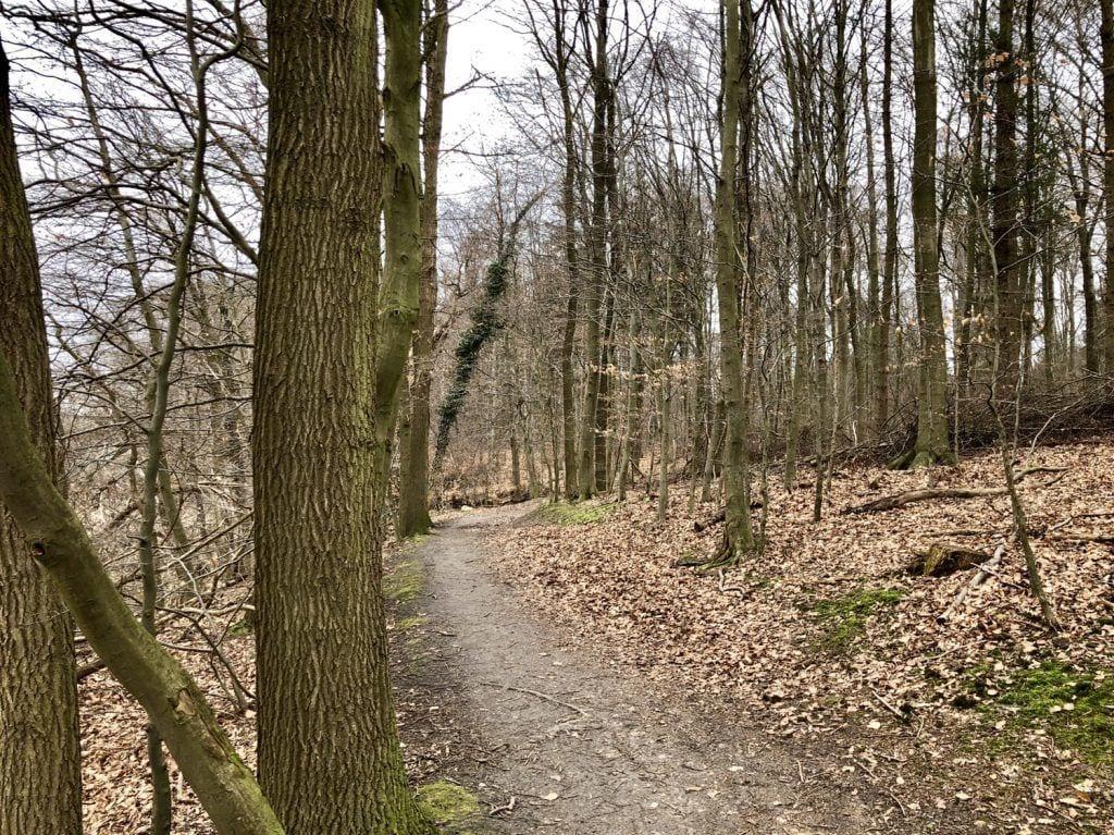 Mountainbiken in Hamburg - Singletrail im Forst Hagen bei Ahrensburg