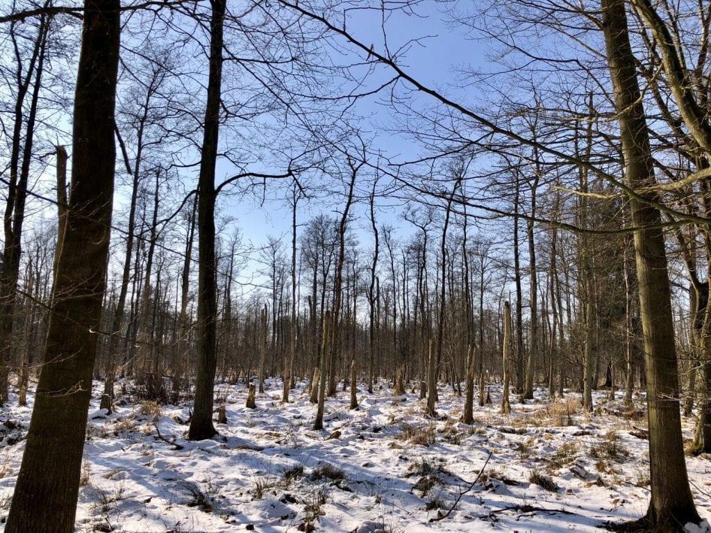 Totholz und Sumpf im Duvenstedter Brook