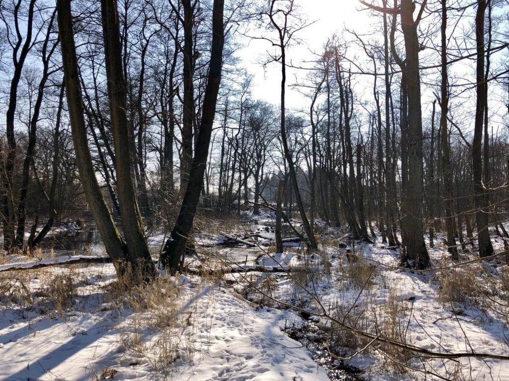 Vereister Bach und Moorwald im Duvenstedter Brook