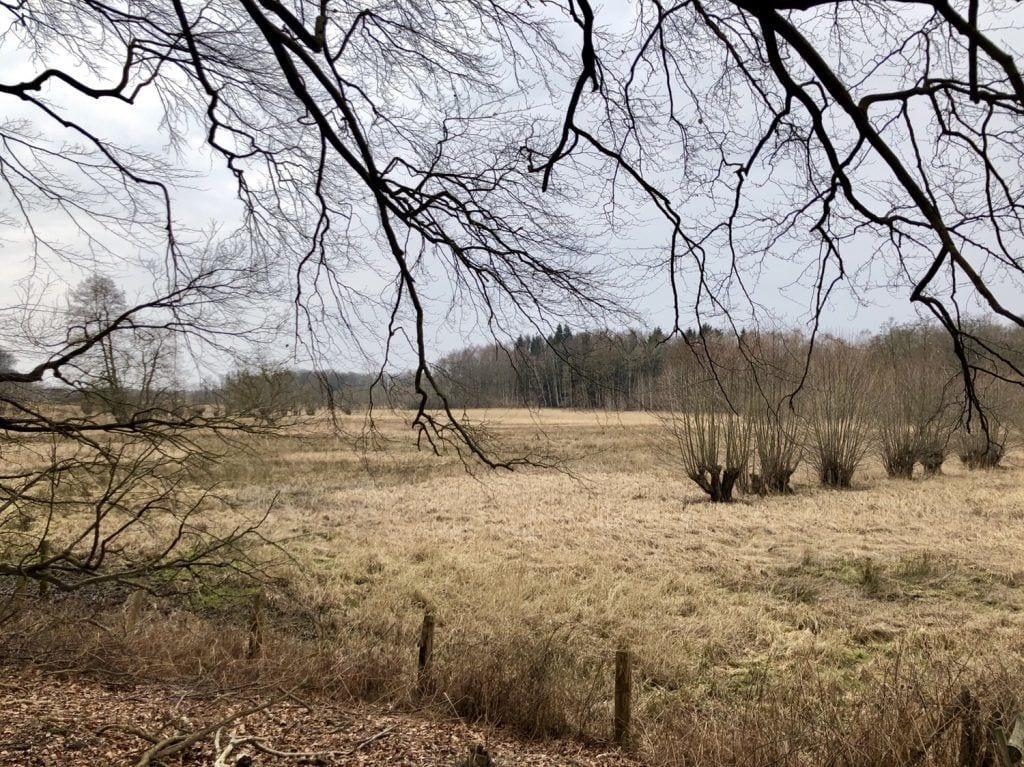 Wiesenlandschaft am Forst Hagen bei Ahrensburg