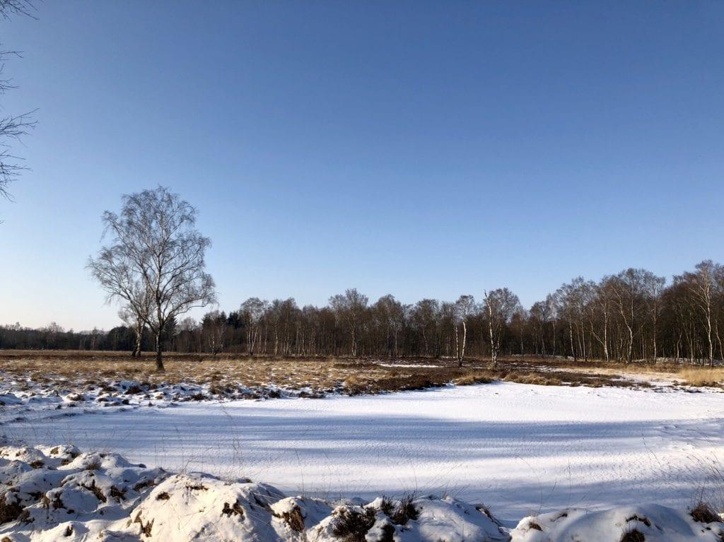Winterlandschaft im Duvenstedter Brook (2)