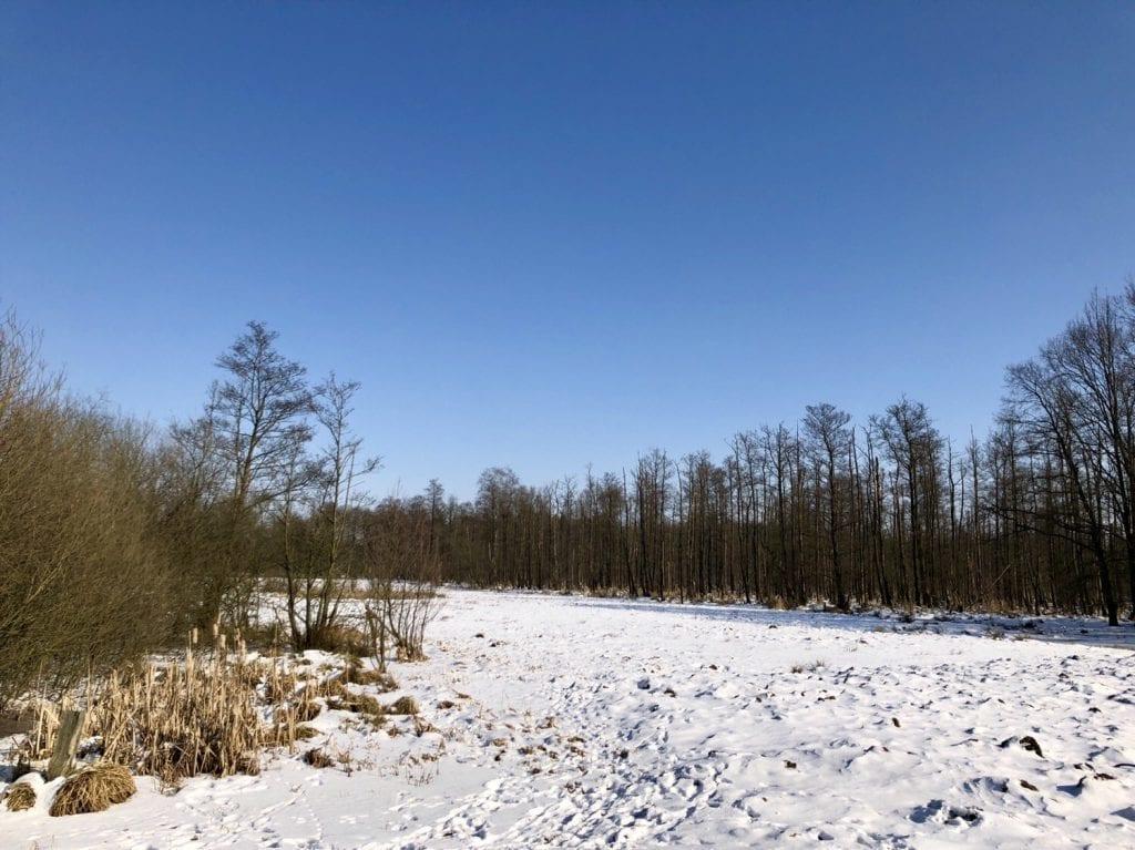 Winterliche Sumpflandschaft im Duvenstedter Brook