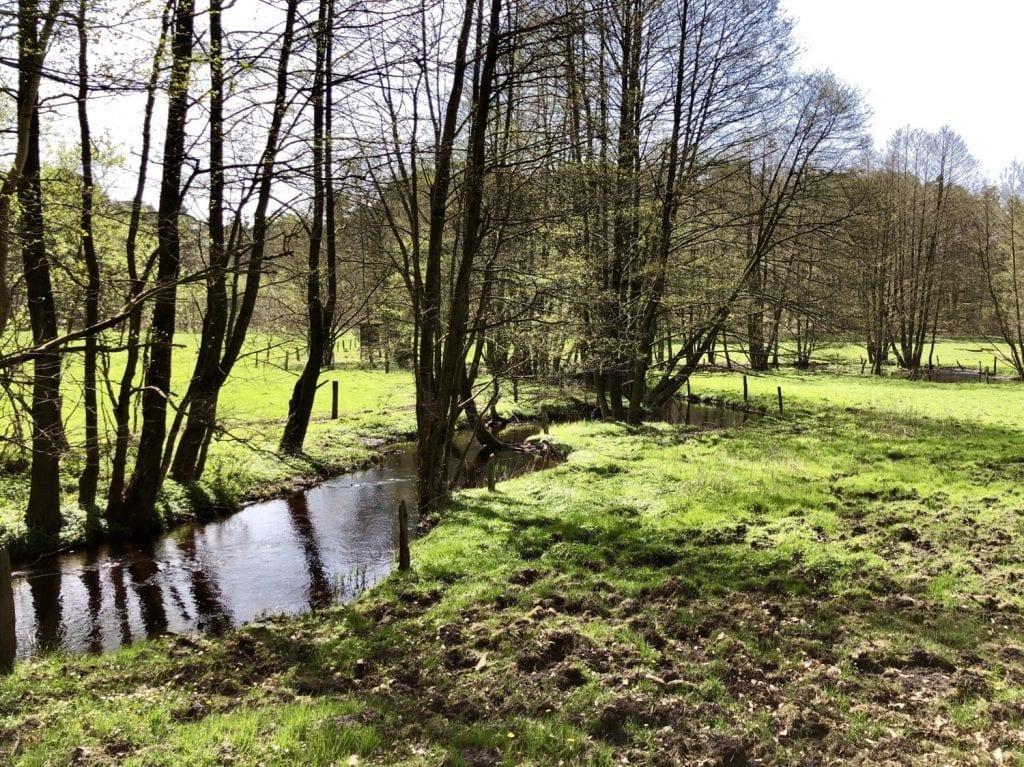 Flussaue des Hellbach im Naturschutzgebiet Hellbachtal (2)