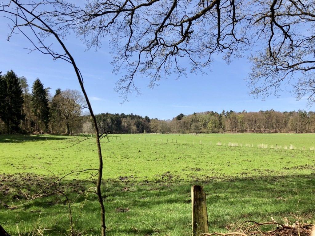 Frühlingswiese im Naturschutzgebiet Hellbachtal