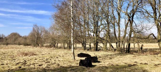 Wandern gehen in Hamburg: Im Höltigbaum und Stellmoorer Tunneltal