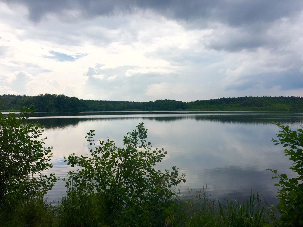 Großer Lausiger Teich am Elberadweg bei Bad Schmiedeberg