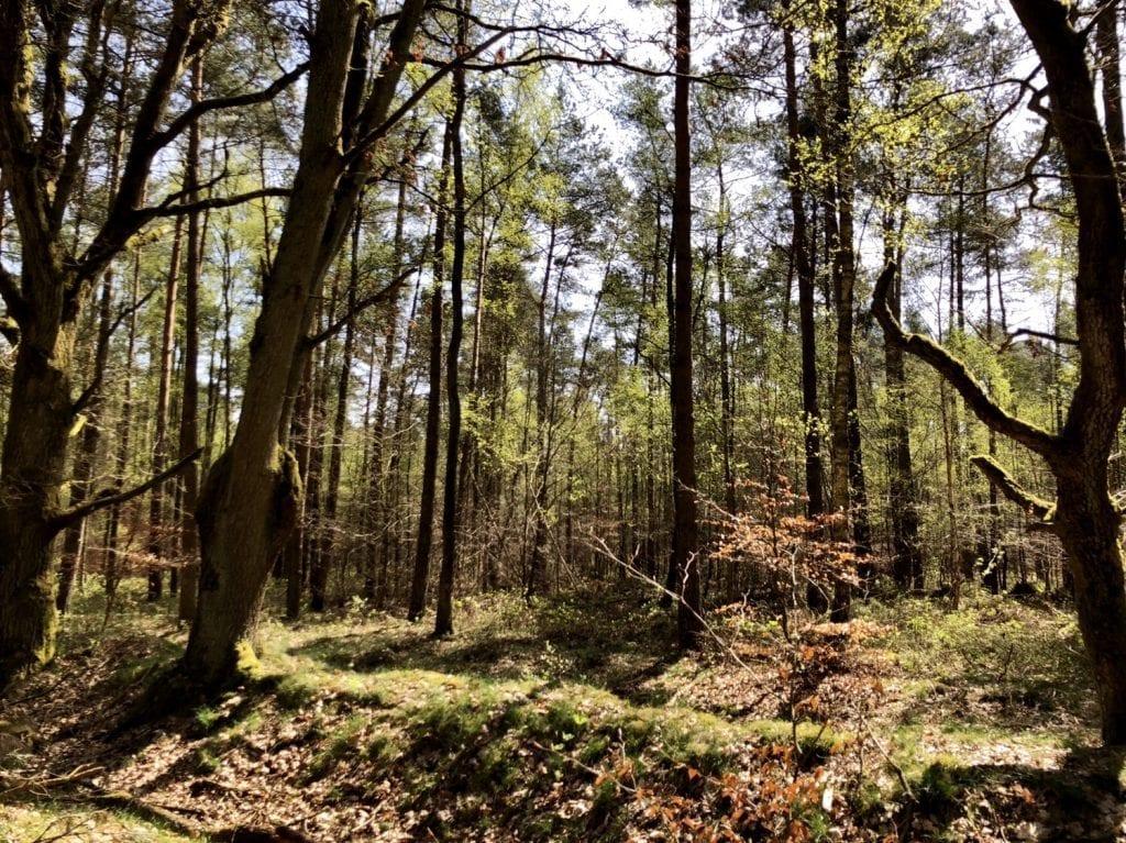Im Wald bei Güster