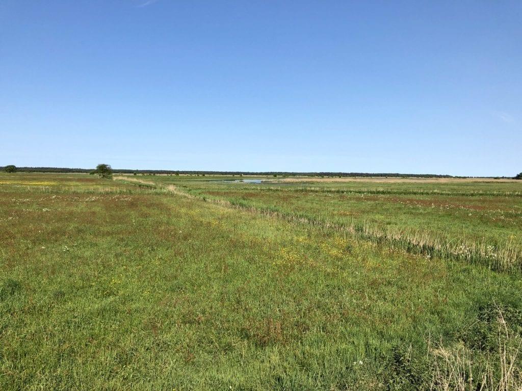 Blick über die Wiesenlandschaft am Prerower Strom bei Wieck