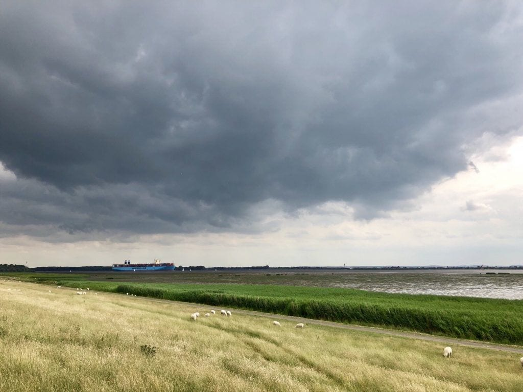 Das tidebeeinflusste Elbvorland - im Hintergrund ein Containerriese auf dem Weg zur Nordsee