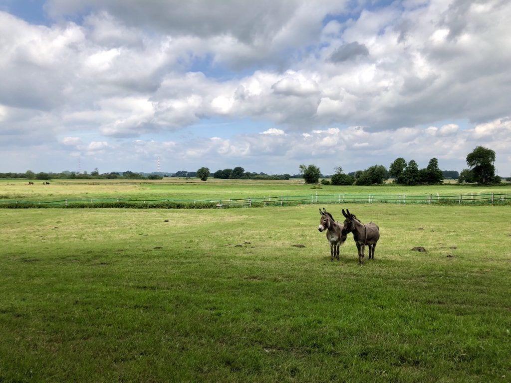 Die beiden neugierigen Esel