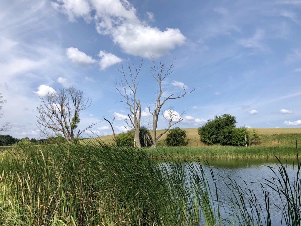 Wanderung im Lassaner Winkel - hier am Kleinen See bei Lassan