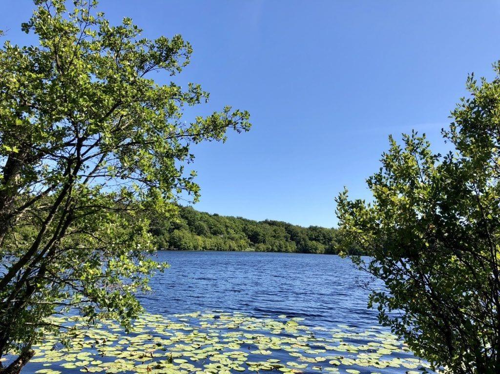 Am See Eksholmssjön in Südschweden
