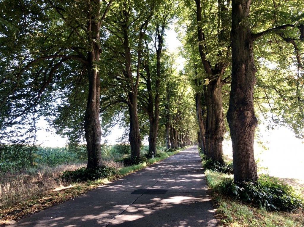 Die Allee nach Krummin auf der Fahrradtour auf Usedom