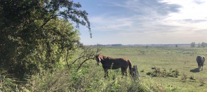 Schöne Fahrradtour von Wolgast auf die Insel Usedom und zurück