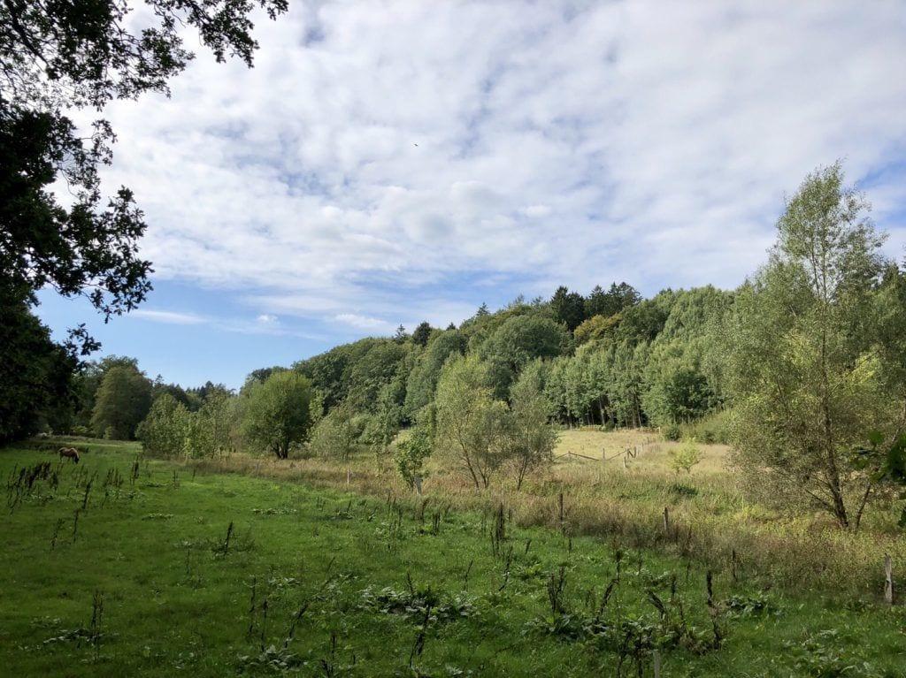 Landschaft bei Sellhorn in der Lüneburger Heide