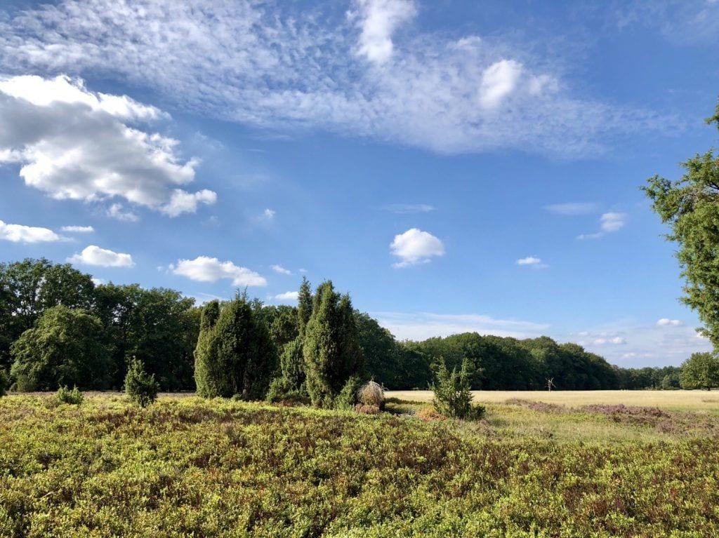Landschaft bei Wilsede in der Lüneburger Heide