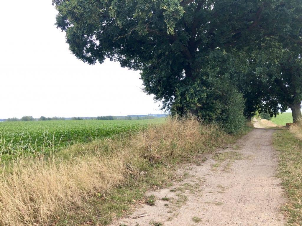 Radweg südlich von Tarnewitz bei Boltenhagen - Fahrradtour auf dem Ostseeradweg