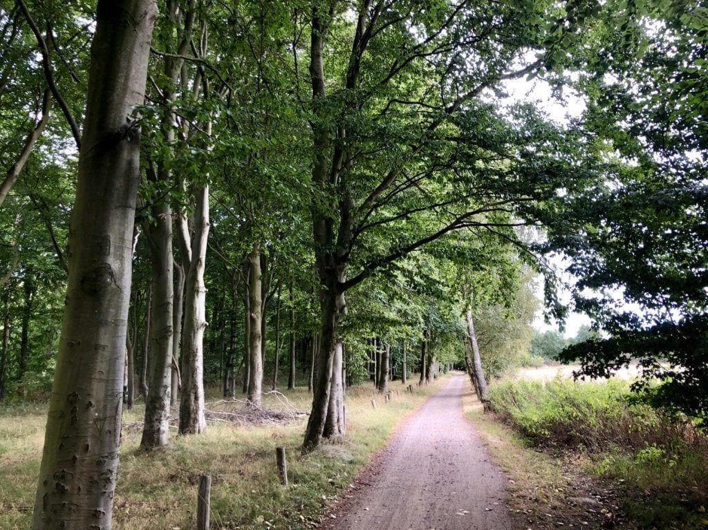 Der Radweg am Naturschutzgebiet Stoltera bei Warnemünde auf der Fahrradtour