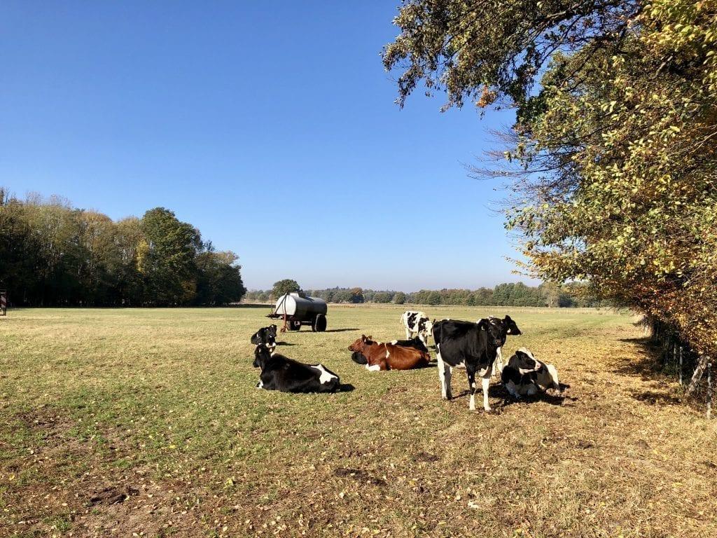 Eine Kuhweide am Borsteler Wohld - wandern im Himmelmoor