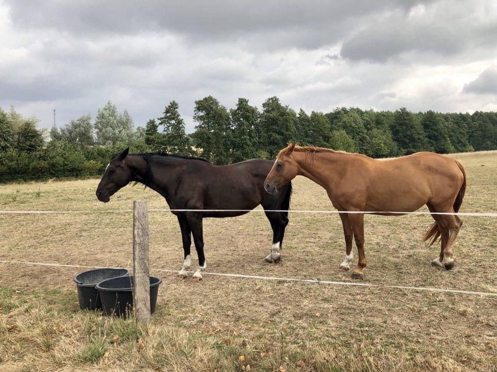 Pferde auf der Koppel bei Stove