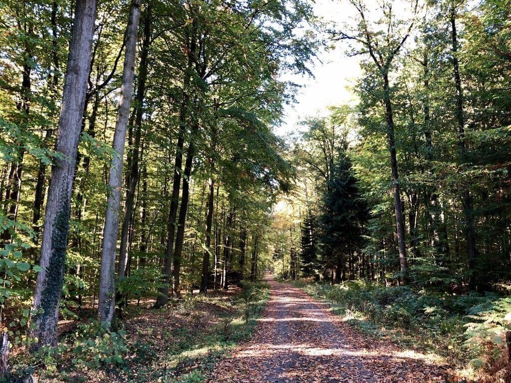 Wanderweg im Borsteler Wohld, westlich des Himmelmoores