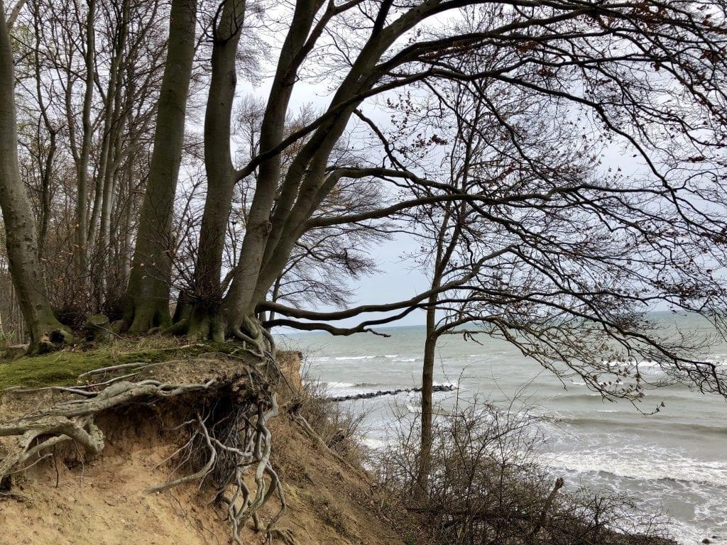 Wandern an der Ostsee - Ausblick im Kagelbusch bei Grömitz