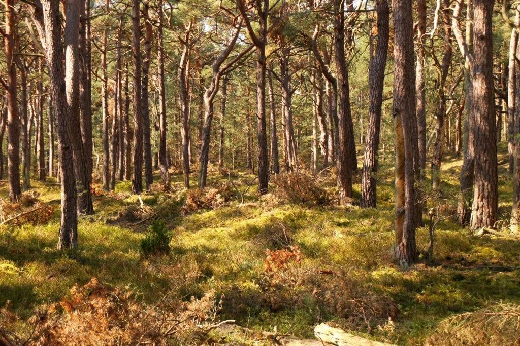Wandern auf dem Darß: Im Darßer Urwald bei Prerow