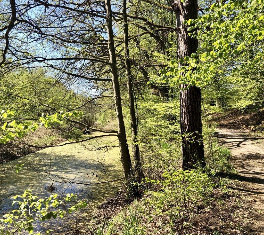 Wandern an der Bille-Aue westlich von Aumühle