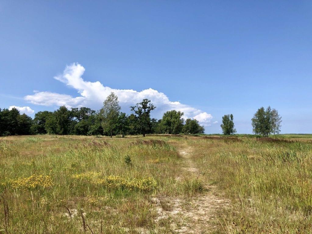 Der Wanderweg hinter der Düne in Freest