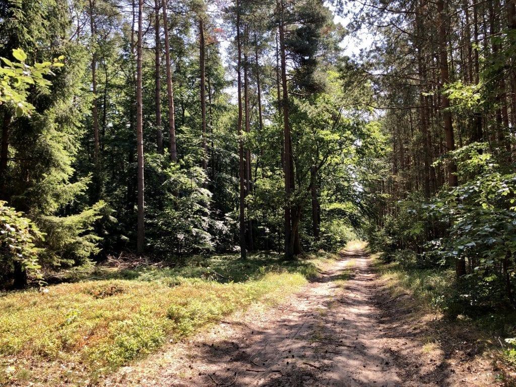 Wandern durch den Wald zwischen Spandowerhagen und Nonnendorf