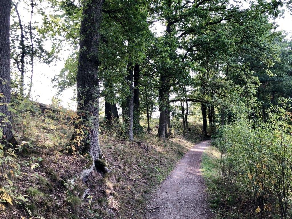 Auf ins Radenbachtal - östlich von Undeloh