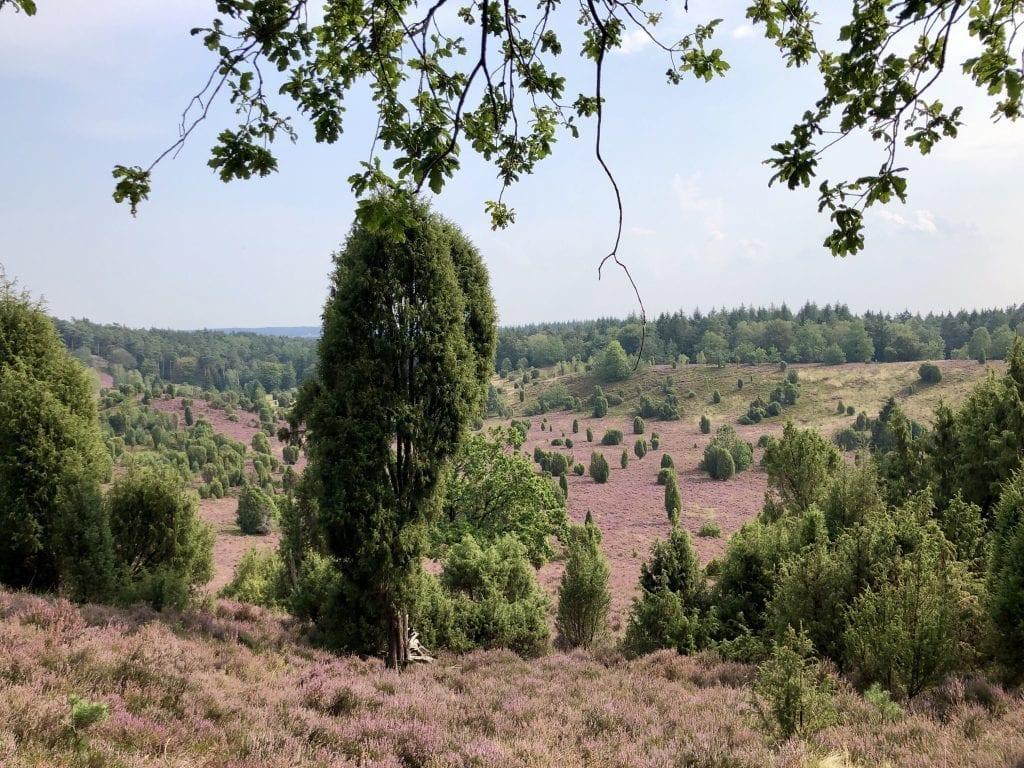 Blick über den Totengrund in der Lüneburger Heide