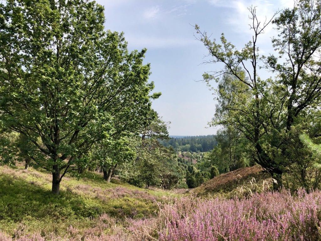 Blick in den Totengrund in der Lüneburger Heide